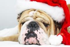 Bulldog di natale in un cappello Fotografia Stock