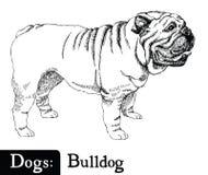 Bulldog di stile di schizzo del cane Fotografia Stock