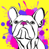 Bulldog dog animal french  illustration pet breed cute drawing puppy Stock Images