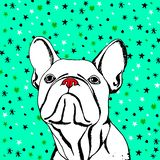 Bulldog dog animal french  illustration pet breed cute drawing puppy Royalty Free Stock Photo