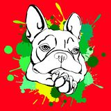 Bulldog dog animal french  illustration pet breed cute drawing puppy Stock Photography