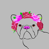 Bulldog dog animal french illustration pet breed cute drawing puppy Royalty Free Stock Photography