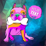 Bulldog dog animal french vector illustration pet breed cute drawing Royalty Free Stock Photos