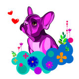 Bulldog dog animal french vector illustration pet breed cute drawing puppy Stock Photography