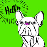 Bulldog dog animal french vector illustration pet breed cute drawing puppy Royalty Free Stock Photos