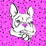 Bulldog dog animal french vector illustration pet breed cute drawing puppy Royalty Free Stock Photography