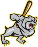 Bulldog Dog Baseball Hitter Batting Cartoon Royalty Free Stock Photos