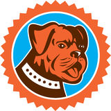 Bulldog Dog Mongrel Head Mascot Rosette Stock Photo