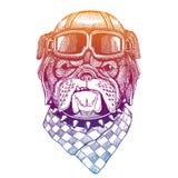 Bulldog, dog wearing vintage aviator leather helmet. Image in retro style. Flying club or motorcycle biker emblem
