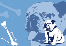 Bulldog ed ossa Immagine Stock