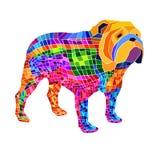 Bulldog english dog breed portrait illustration Royalty Free Stock Photo
