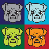 Bulldog Face. Faces of bulldogs on multicolored backgrounds Royalty Free Stock Photo