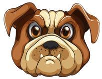 Bulldog. Face on white background Stock Photography