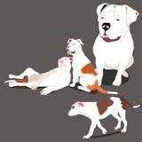 Bulldog family Stock Photo