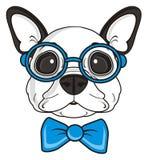 Bulldog francese con i vetri Fotografia Stock