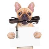 Bulldog francese del Fawn Fotografie Stock Libere da Diritti