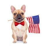 Bulldog francese del Fawn immagine stock