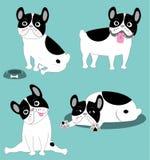 Bulldog francese divertente Fotografie Stock