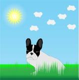 Bulldog francese nell'erba al sole Immagini Stock Libere da Diritti