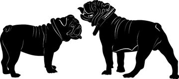Bulldog. French Bulldog purebred dog standing in side view - vector silhouette