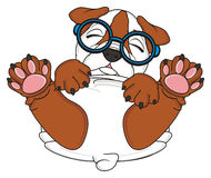 Bulldog in funny glasses Royalty Free Stock Images