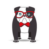 Bulldog with glasses red bow Royalty Free Stock Photos