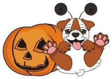 Bulldog with halloweens pumpkin Stock Image
