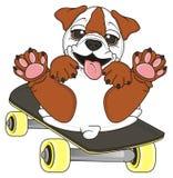 Bulldog hamming on skate Royalty Free Stock Photography