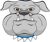 Bulldog head cartoon Royalty Free Stock Photo