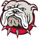 Bulldog head front Royalty Free Stock Photo
