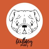 Bulldog head isolated on white background. Vector illustration, design element for cards, banners and flyers. Stock Photos