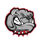 Bulldog head mascot Stock Images