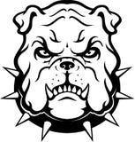 Bulldog Head. Tough pet bulldog front view head Royalty Free Stock Images
