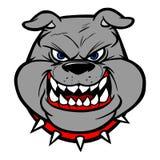 Bulldog head on View Royalty Free Stock Photo