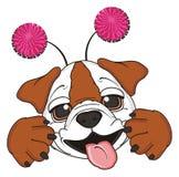Bulldog with hoop Royalty Free Stock Photos