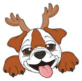 Bulldog with horns Stock Image
