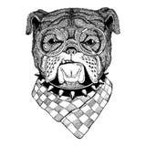 Bulldog Image for tattoo, logo, emblem, badge design. Bulldog Illustration of dog for tattoo, logo, emblem, badge design Stock Photography