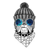 Bulldog Image for tattoo, logo, emblem, badge design Royalty Free Stock Images