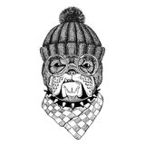 Bulldog Image for tattoo, logo, emblem, badge design Stock Photo