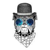 Bulldog Image for tattoo, logo, emblem, badge design. Bulldog Illustration of dog for tattoo, logo, emblem, badge design Royalty Free Stock Photography