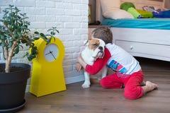 Bulldog inglese nella vita godente domestica alla moda Fotografia Stock