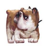 Bulldog inglese sveglio royalty illustrazione gratis