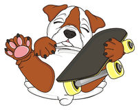 Bulldog with large skate Stock Photo