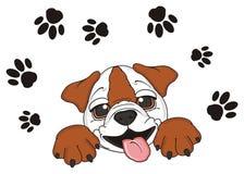 Bulldog with a lot of footprints Stock Photos