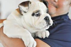 Bulldog and a man Royalty Free Stock Photography