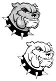 Bulldog mascot Royalty Free Stock Photos