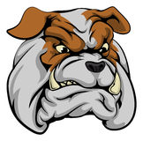 Bulldog mascot character. An illustration of a fierce bulldog animal character or sports mascot Stock Photos