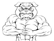 Bulldog Mascot. Character or sports mascot ready for a fight Stock Image