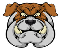 Bulldog mascot face Royalty Free Stock Photos