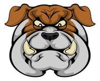 Bulldog mascot face. A mean looking bulldog mascot character staring forward Royalty Free Stock Photos
